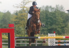 Gelding Diamond Valley Gold 2002